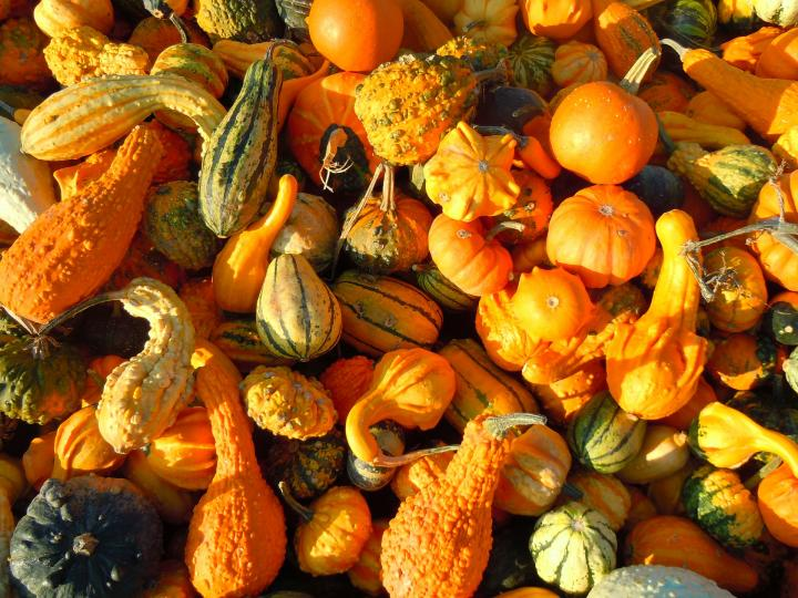 Vegetable Garden In Fall Wallpaper Gourds Types Of Gourds Growing Gourds Curing Gourds