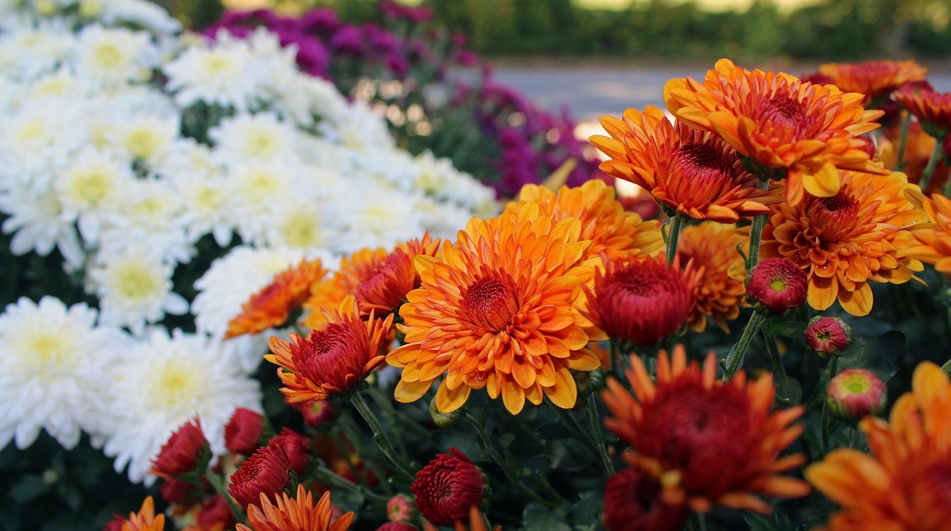 Winter Flowering Plants Zone 7
