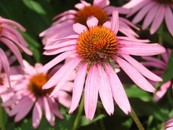 Perennial Flower Garden Design The Old Farmer39s Almanac