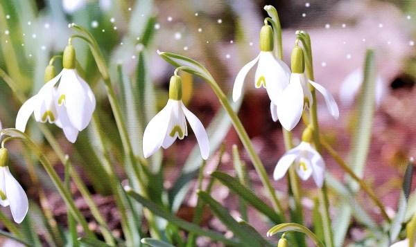 Birth Flower Farmer' Almanac