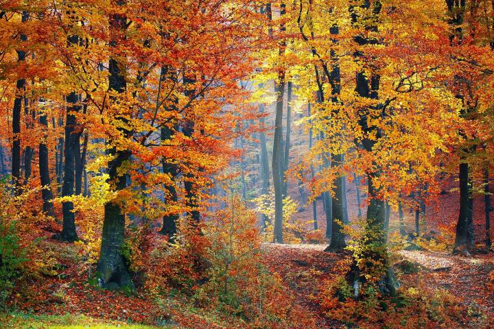 autumnal-equinox-fall.jpg