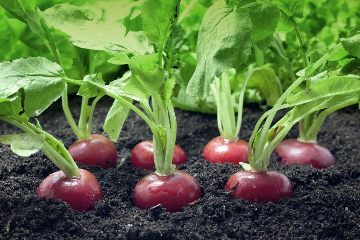 10 Easiest Vegetables To Grow In The Home Garden The Old Farmer S Almanac
