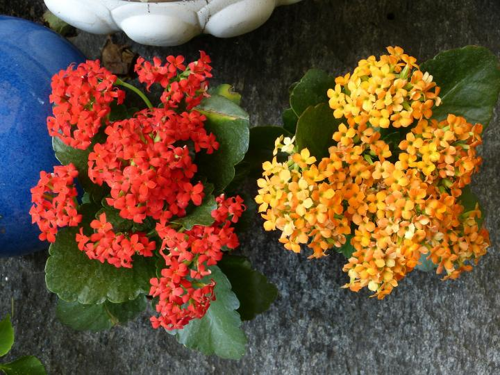 Flowering Houseplants To Brighten Winter Old Farmer S Almanac