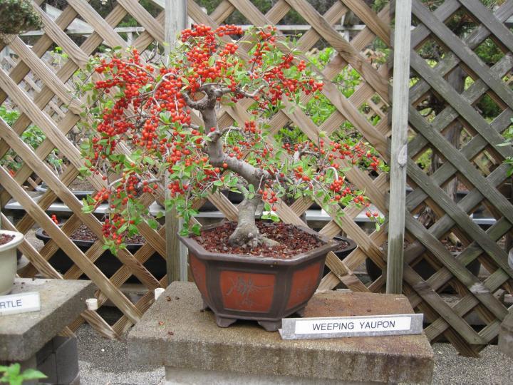 wimberley_bonsai_012_full_width.jpg