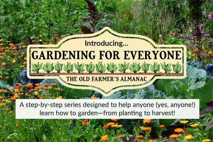 When To Water Vegetables Watering Chart The Old Farmer S Almanac