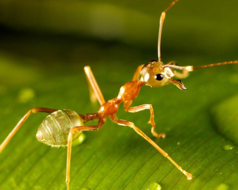 13 curiosidades sobre las hormigas que te sorprenderán