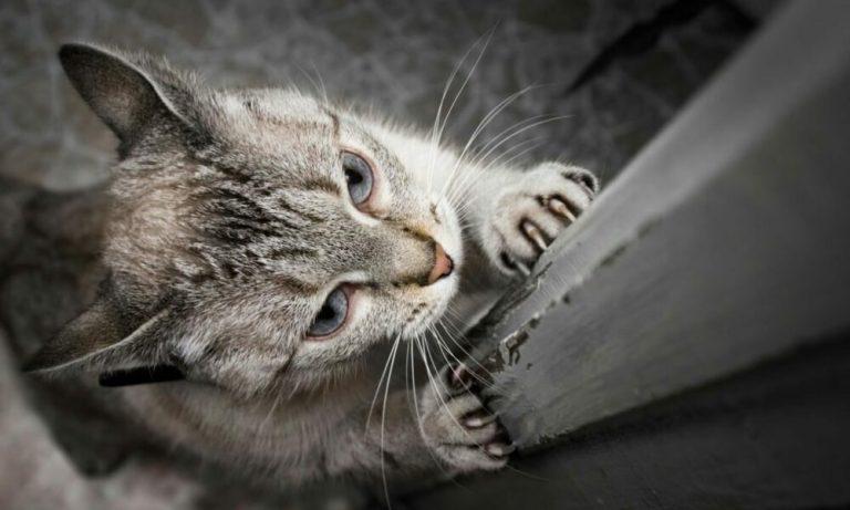 evitar que tu gato arañe los muebles
