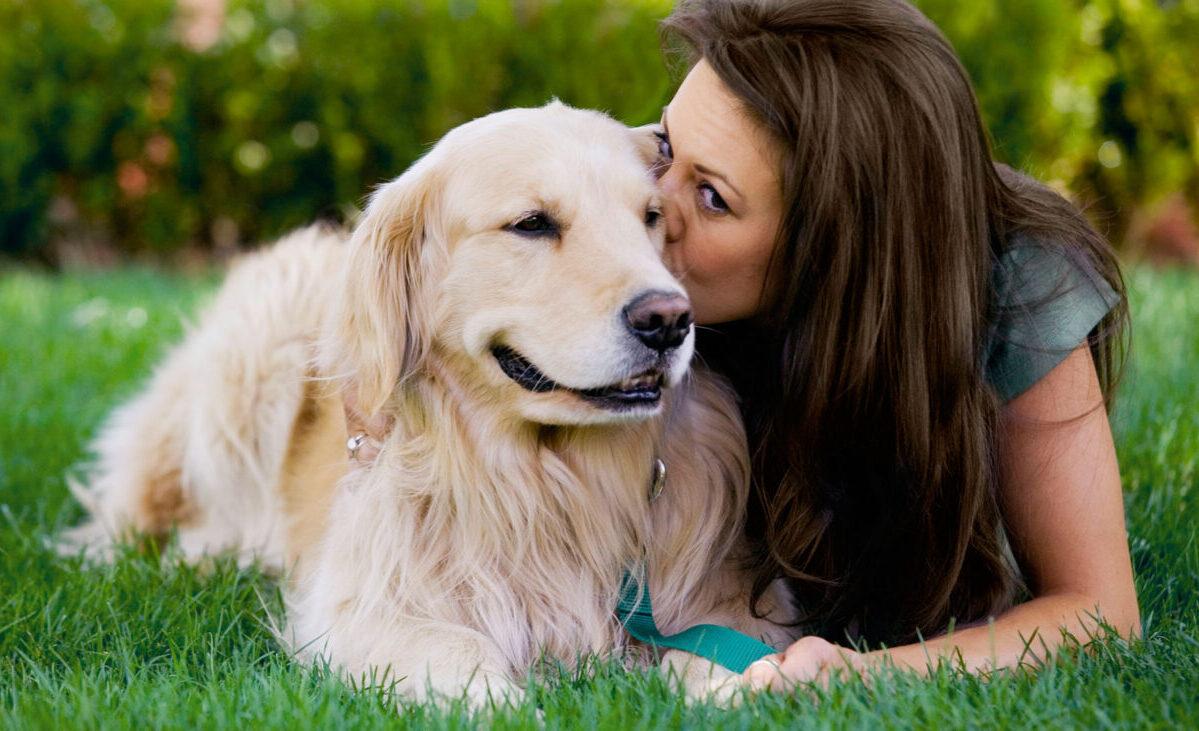 cuidados básicos que necesita un perro