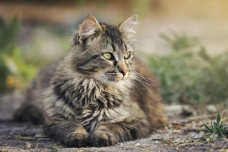 Productos para evitar o repeler insectos en gatos