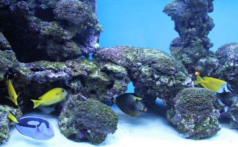 Cómo hacer un acuario de agua salada paso a paso