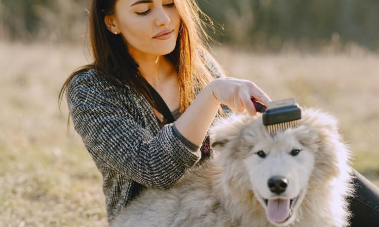 mejores tipos de cepillos para perros