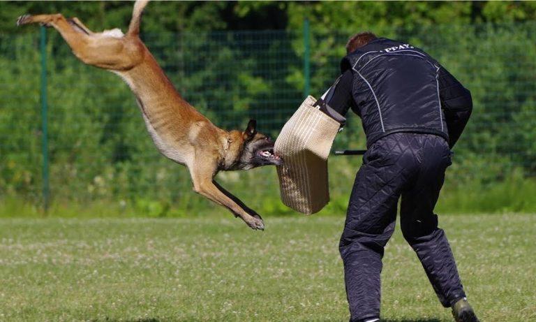 perros especializados en defensa y ataque