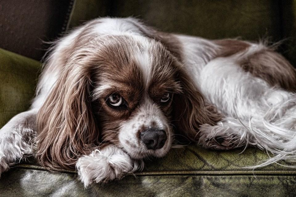 Proteger al perro de los parásitos