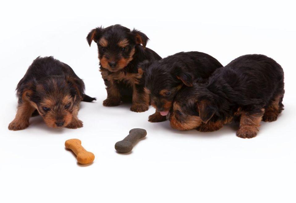 dieta para perros