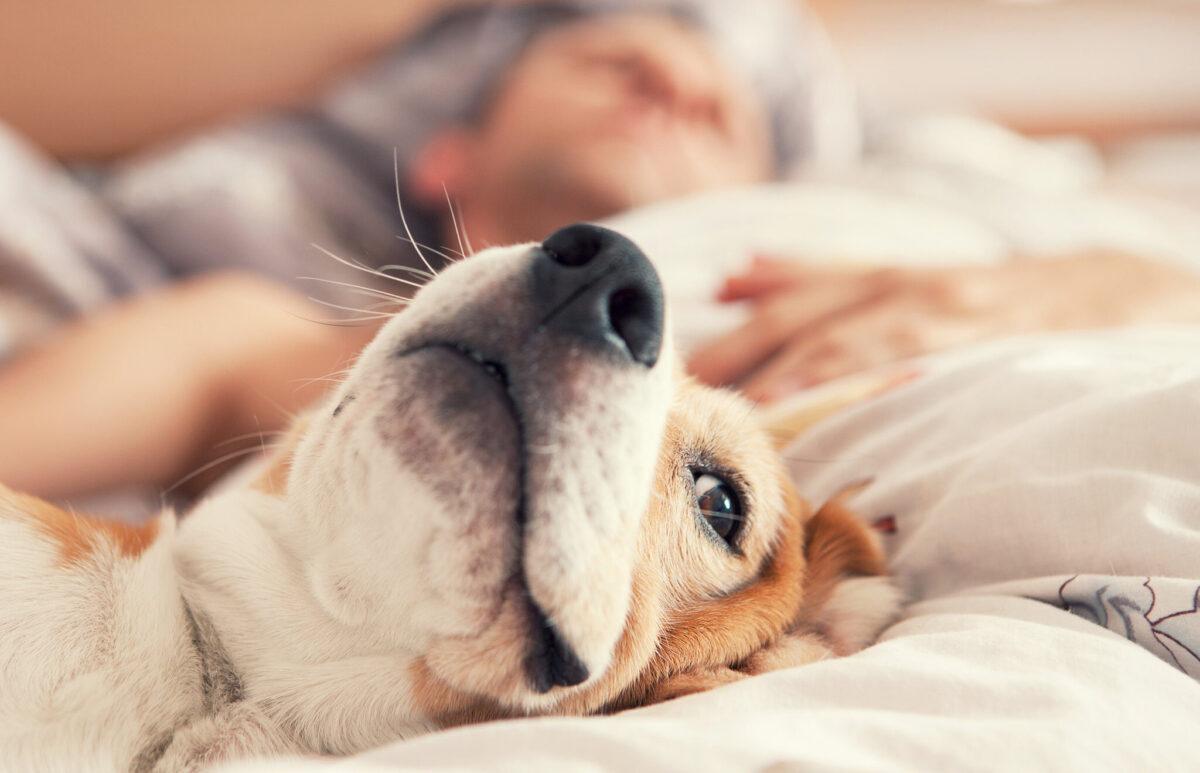 dormir con tu perro en la cama