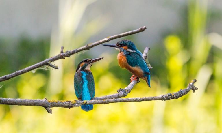 Estas son las especies de pájaro más inteligentes