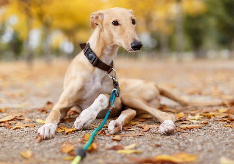 por qué adoptar un perro abandonado