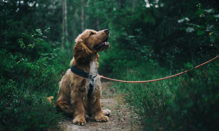 Sigue estos consejos para acampar o ir de camping con un perro