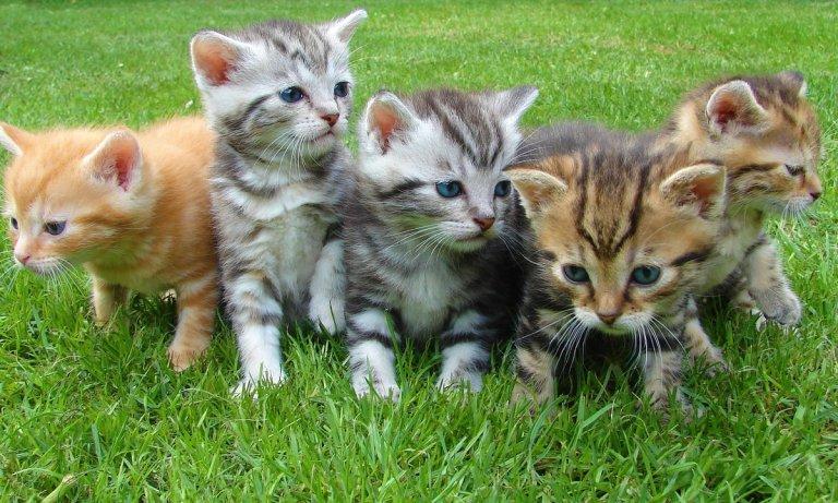 Sigue estos consejos para cuidar cachorros recién nacidos de gato