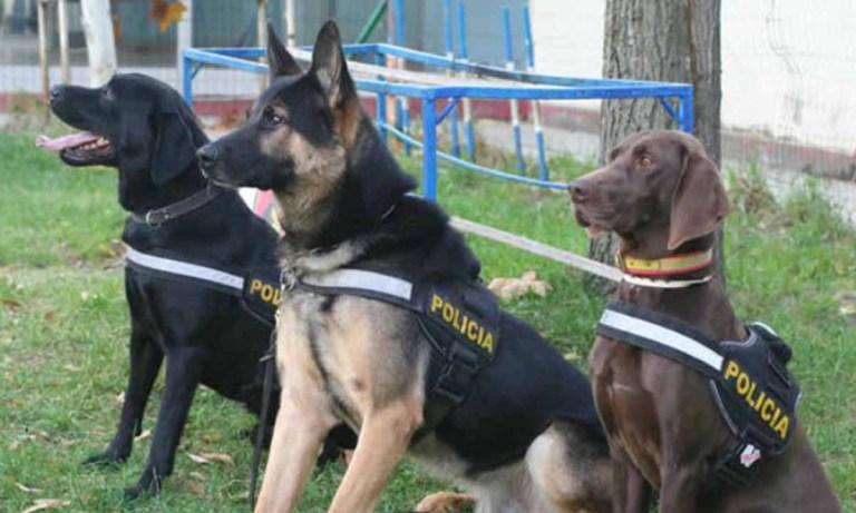 Perros que detectan el COVID