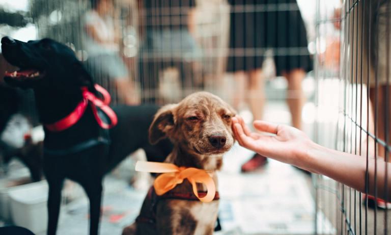 Conoce nuestra lista de nombres originales y bonitos para perros