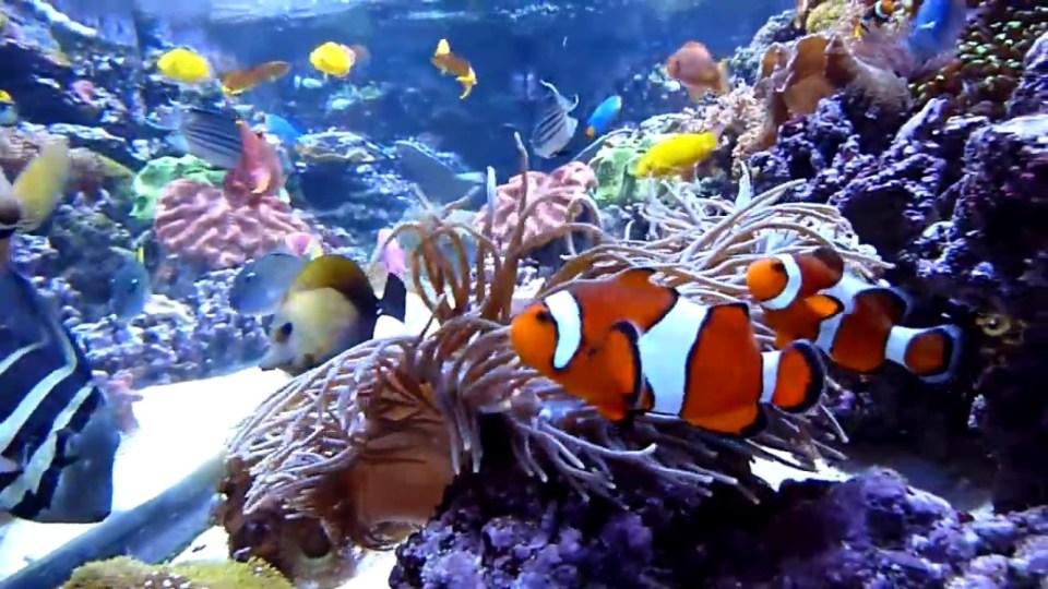trasladar un acuario marino en funcionamiento