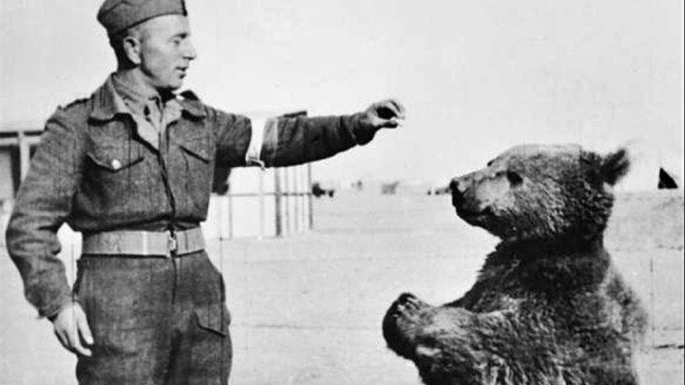 animales en el ejército polaco, el oso Wojtek