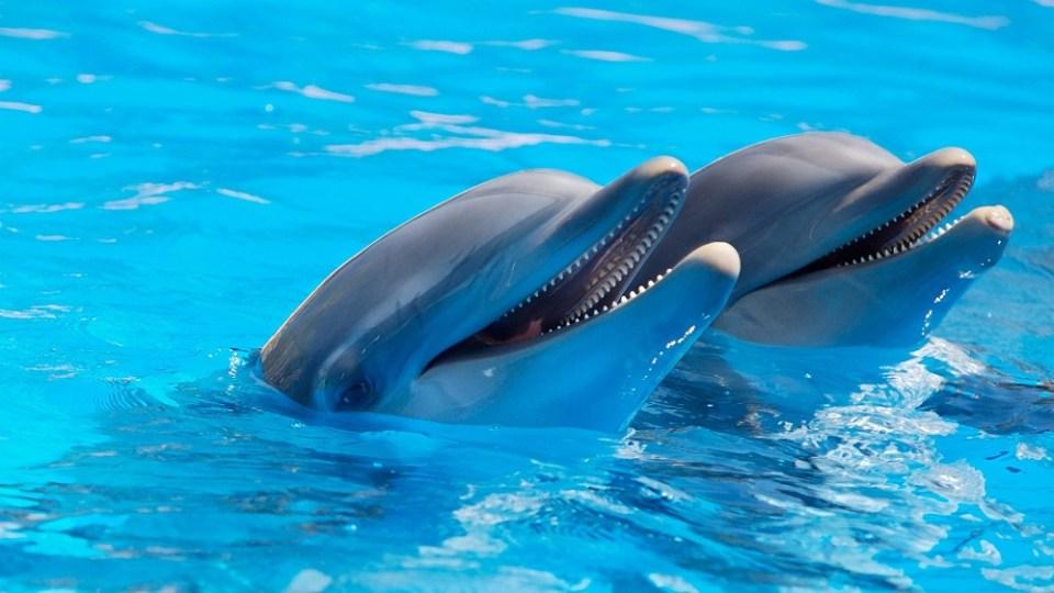 Cosas curiosas de los delfines