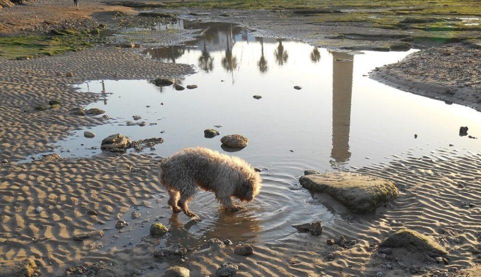 Problemas de un perro que bebe de charcos