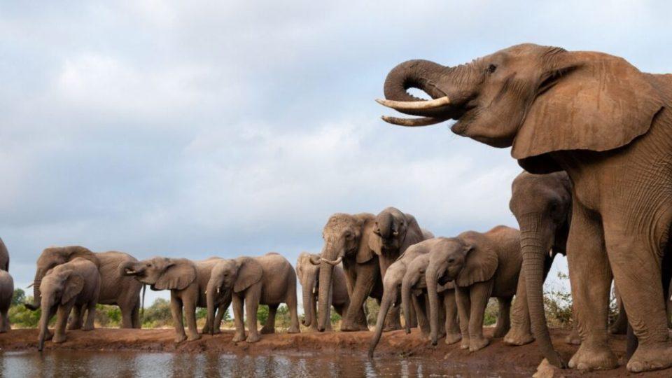 el agua es el motivo de la muerte de los elefantes Bostwana