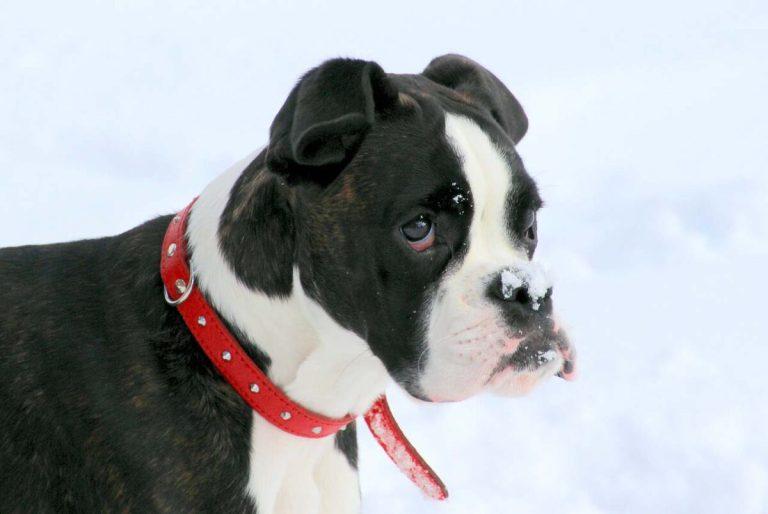 Tipos de collares y arneses para perros
