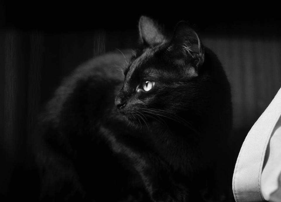 PETA cree que el mes de octubre es un peligro para los gatos blancos y negros