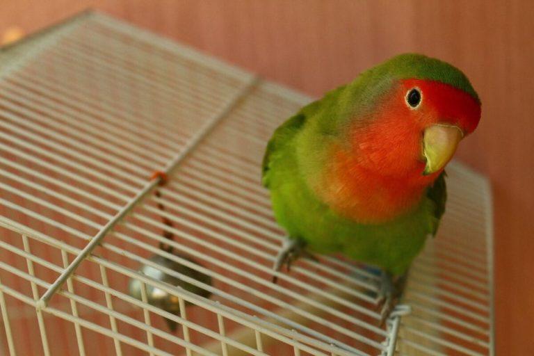 Dejar volar a un pájaro fuera de su jaula