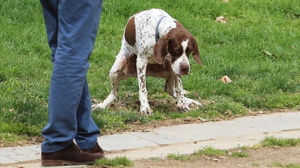 Cómo actuar si tu perro tiene sangre en las heces
