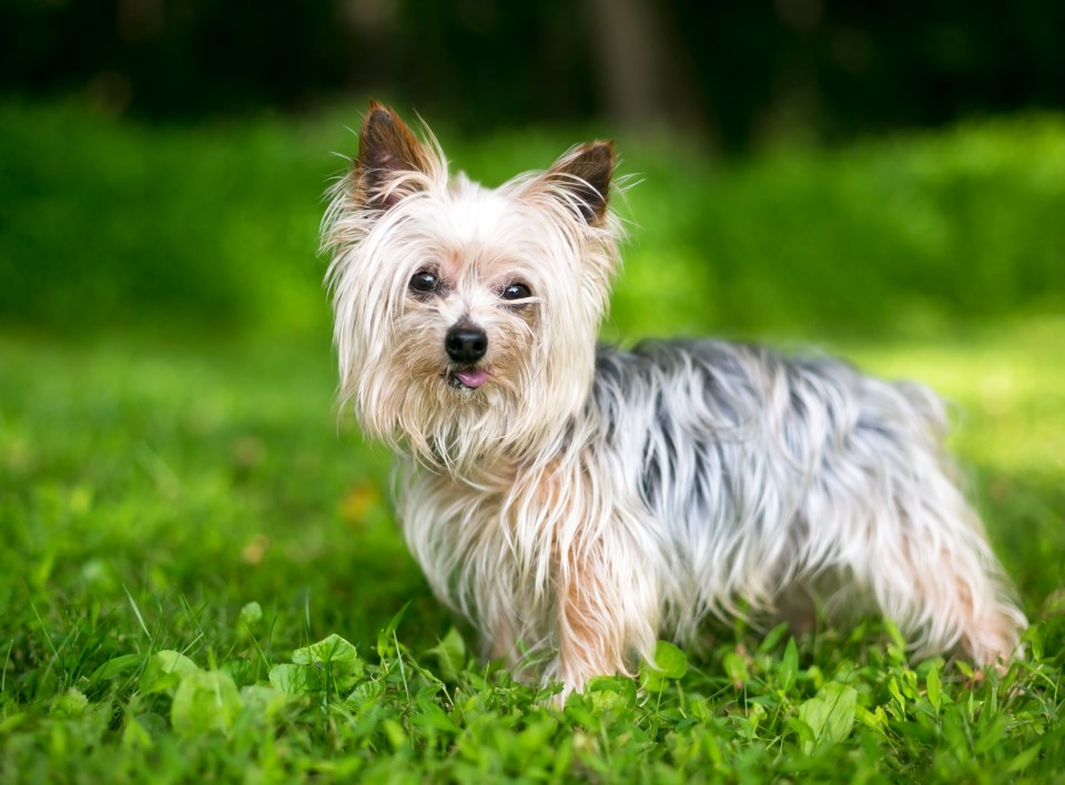 razas de perro que más frío pasan en invierno
