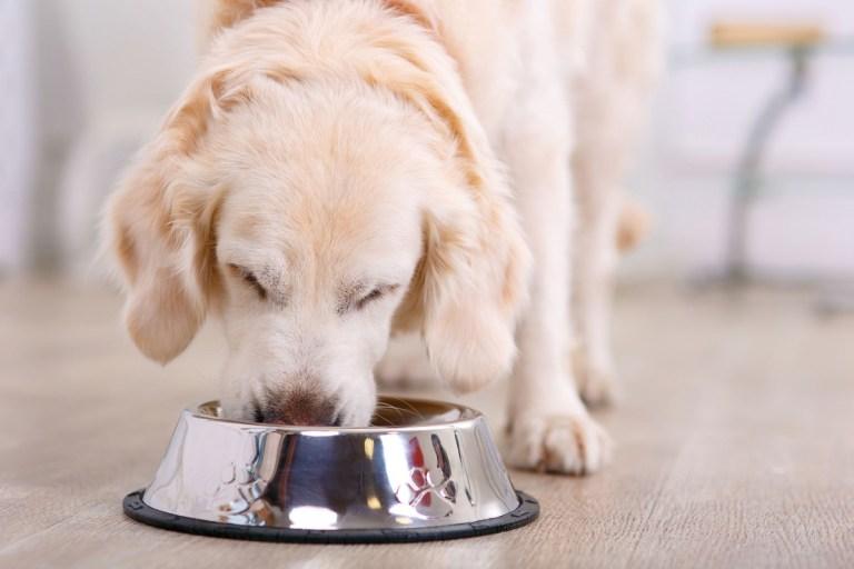 Comida deshidratada para perros