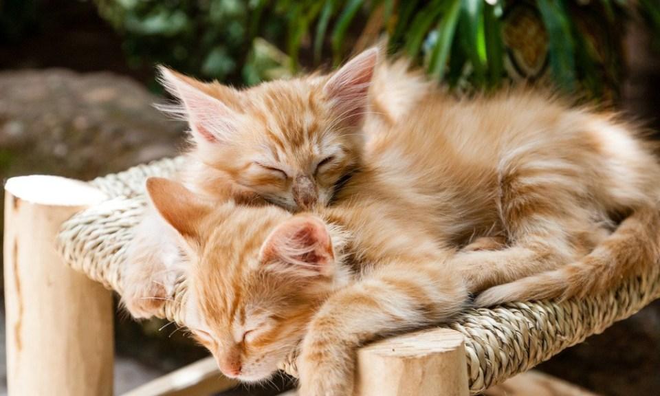 Es mejor tener dos gatos que uno: consejos para tener tu primer gato