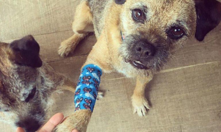 consejos para curar heridas a un perro
