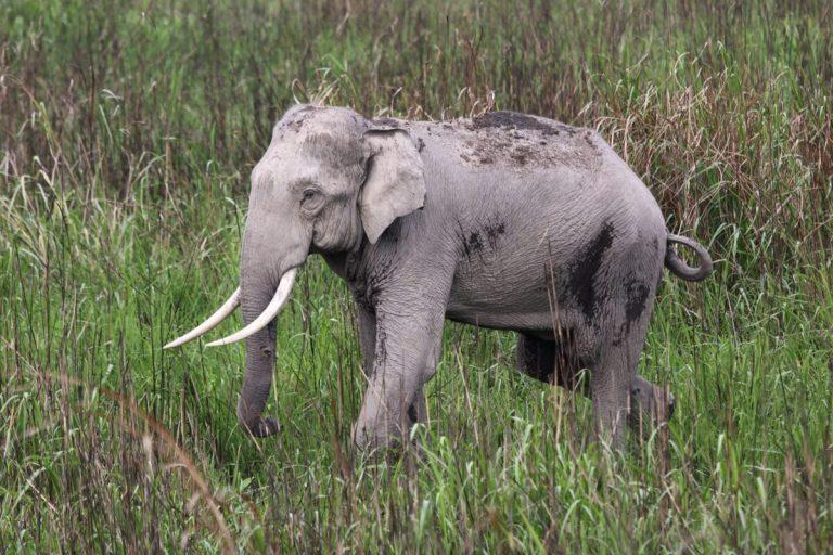 comercio ilegal en las especies de animales