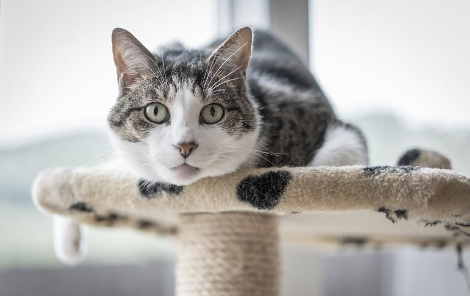 acondiciona tu casa para adoptar un gato