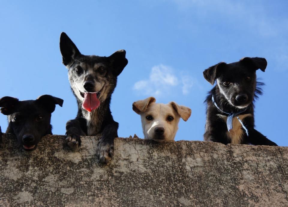 Con paciencia es como puedes enseñar a tu perro a no ladrar en casa incluso estando solo
