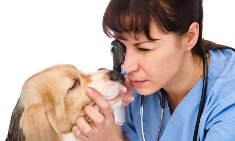 blefaritis en animales