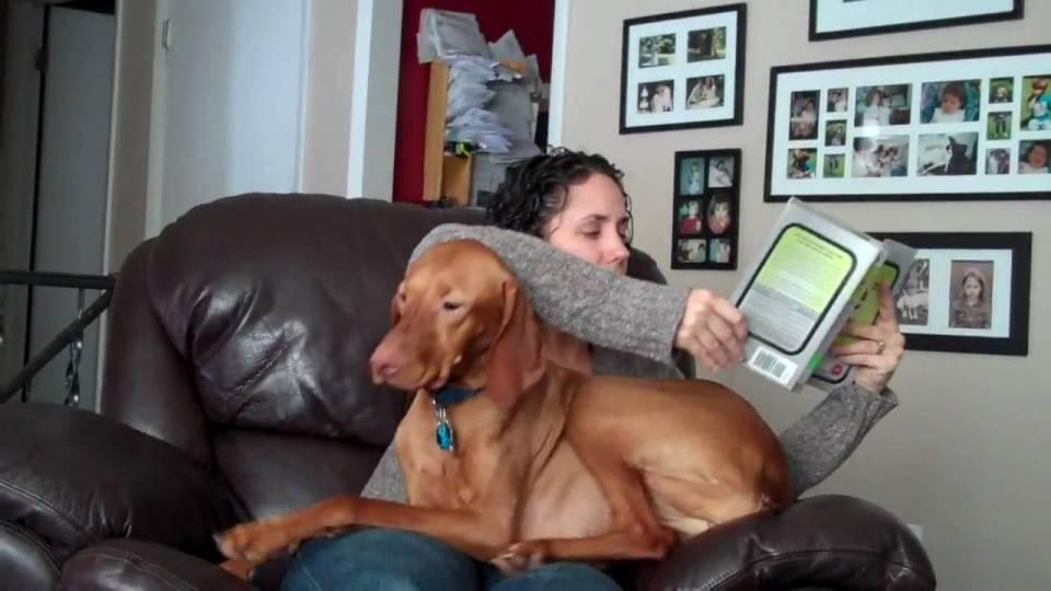 perros con hiperapego
