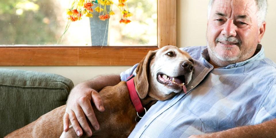 hiperapego perros