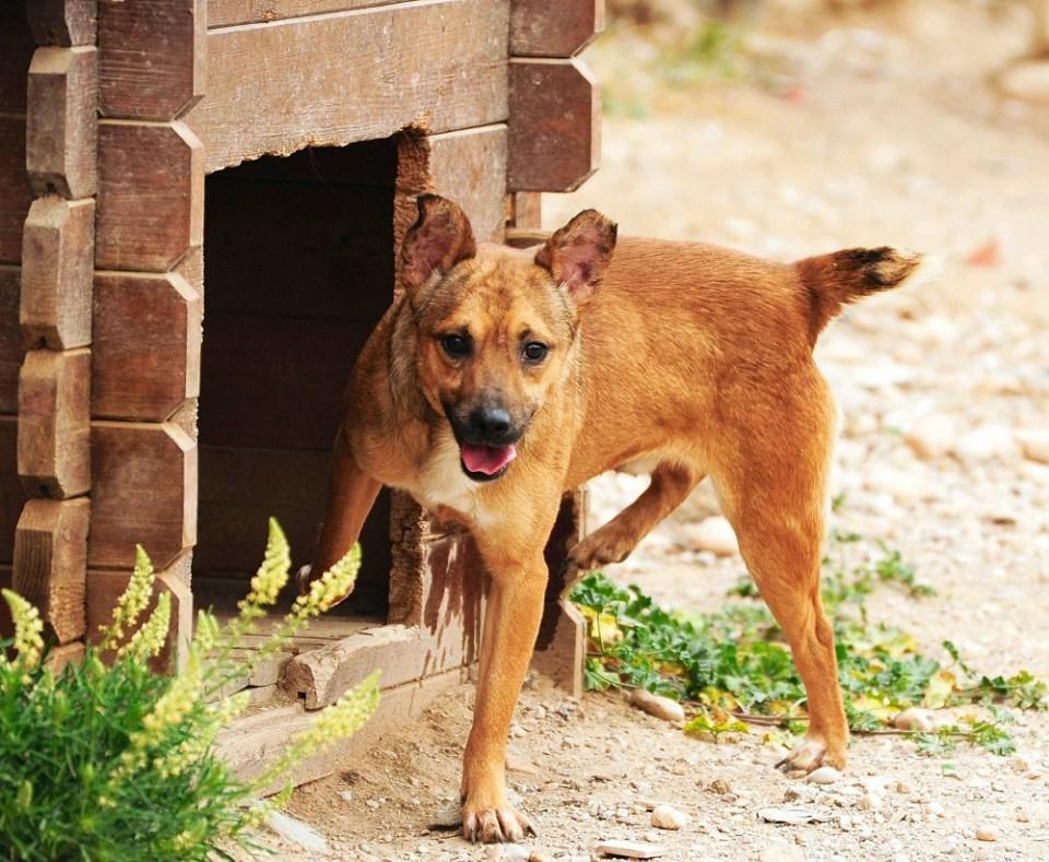 Lucas es otro de los perros para adoptar en Murcia