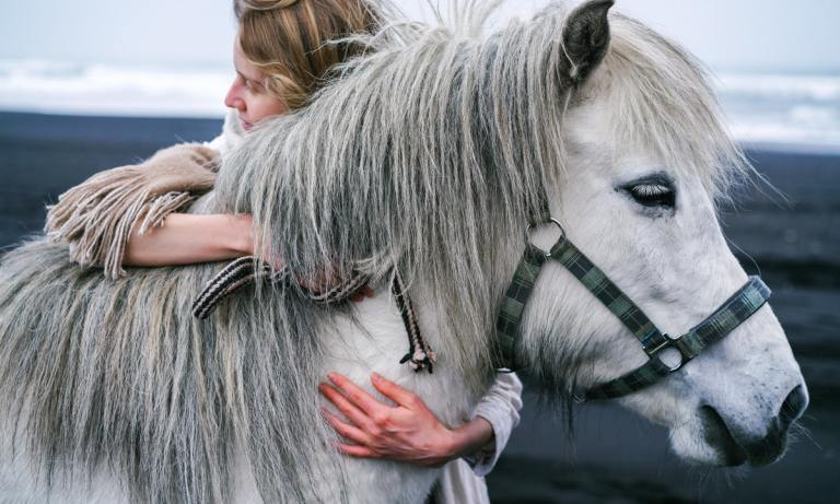 Esto es lo que necesitas saber para tener un caballo como mascota