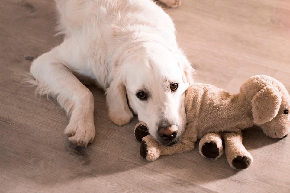 dosis de melatonina para perros
