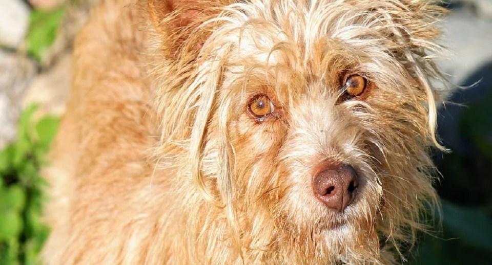 Patitas Sin Rumbo es una de las protectoras donde puedes adoptar un perro en Extremadura
