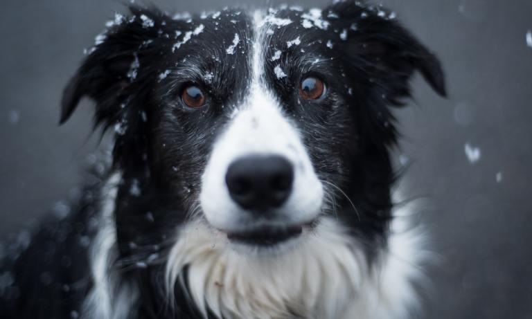 Los cuidados de las almohadillas frente al hielo y la nieve son muy importantes