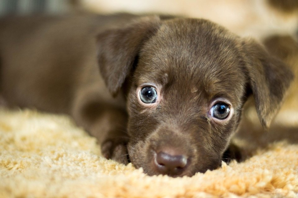 bienvenida a un perro adoptado
